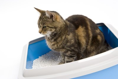 How to Keep Your Cat from Urinating Around the House
