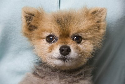 Adopting Puppies for Free