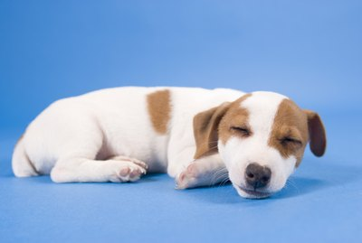 What Causes a Nursing Puppy to Spit Up After Eating?