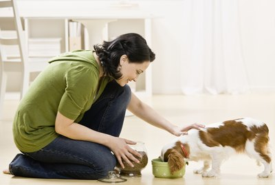 List of Healthy Dog Foods