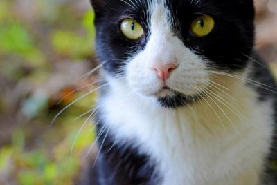 Vinegar As a Cat Repellent