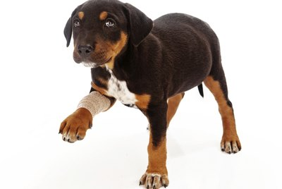 How to Determine Why Your Dog is Limping
