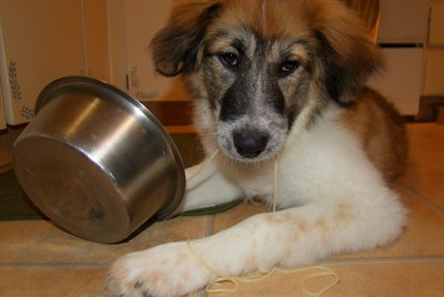 Is Tomato Sauce Harmful to Dogs?