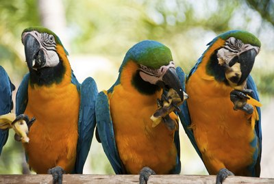 What Kinds of Fruit Can Parrots and Macaws Have?