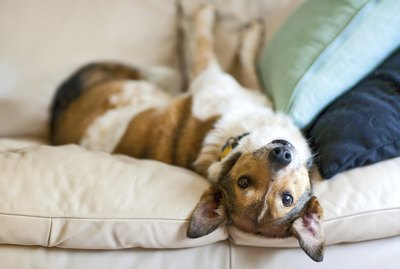 Best Dog Foods for Diarrhea