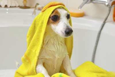 How Often Should You Give a Dog a Bath?
