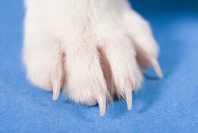 How to Remove Stains From Dog Paws