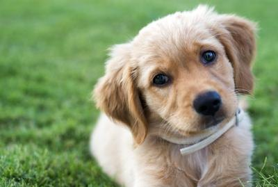 How to Potty Train a Puppy in Seven Days