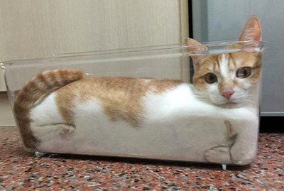 26 Cats Fitting Themselves Into Weird Spaces