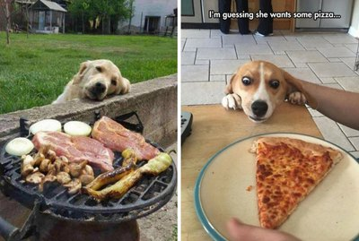 21 Dogs Who Just Want a Little Nibble of What You're Eating