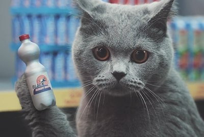 How To Film Cats Shopping in a Mini Supermarket