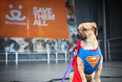 You Can Raise Money For Animal Shelters By Simply Walking Your Dog