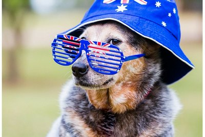 100 Australian Dog Names From The Land Down Under