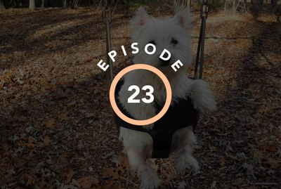 Episode 23: How To Adopt The Dog Of Your Dreams
