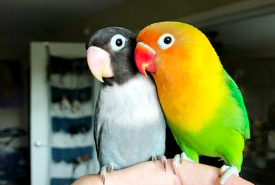 Colorful Parrot Finds A Goth Girlfriend & They're Our New Favorite Lovebirds