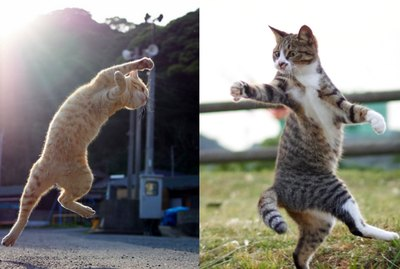 Photog Coaxes Kitties Into Silly Kung Fu Poses With One Simple Trick