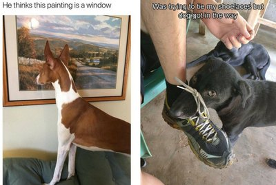Just 22 Random & Hilarious Photos Of Dogs