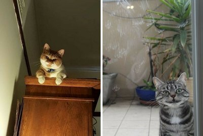 17 Creepy Moments Every Cat Owner Knows