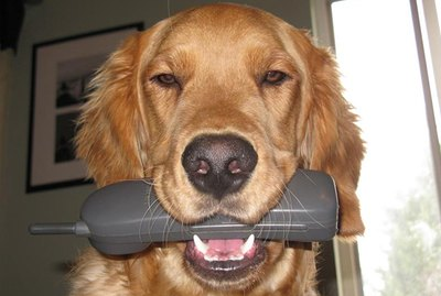 You'll Soon Be Able To Talk To Your Dog On The Phone
