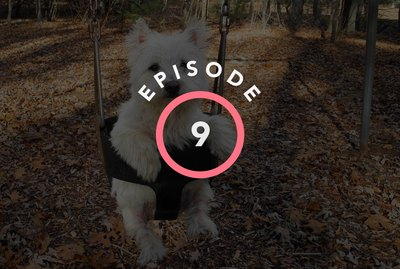Episode 9: Why Is Summer The Most Difficult Season For Pets?