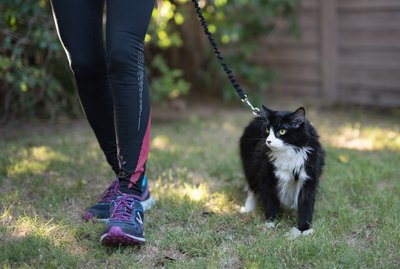 Why You Should Walk Your Cat