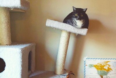 22 Moments When Owners Suspected Their Cats Might Be Fat Now