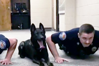 This Police Dog Doing Pushups Is All The #Fitspo You'll Ever Need