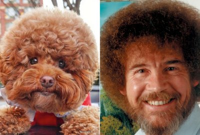 This Bob Ross Look-Alike Dog Is Our Latest Instagram Crush