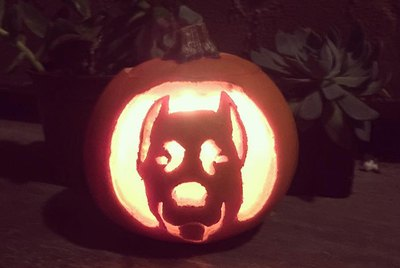 Dog-O-Lanterns Are The Halloween Miracle We've Been Waiting For