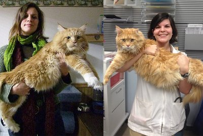 27 Ridiculously Big House Cats