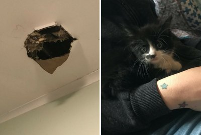 Storm Shakes Surprise Kitten Free From Unlikely Hiding Spot