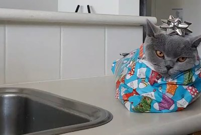 This Video On How To Wrap Your Cat Has Gone Viral — Obviously