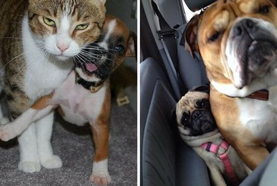 27 Pets Who Are Annoying The Heck Out Of Each Other