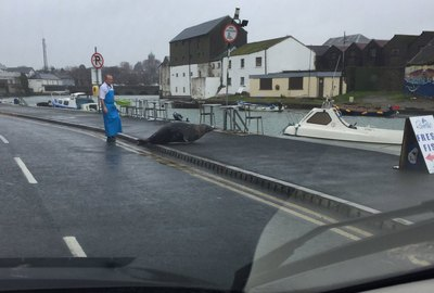 Hungry Seal Feuds With Irish Fishmonger (Again)
