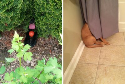 23 Dogs Who Are Winning At Hide & Seek