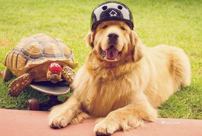 These Photos Of A Rescued Tortoise & His Best Friend Are Turtley Amazing
