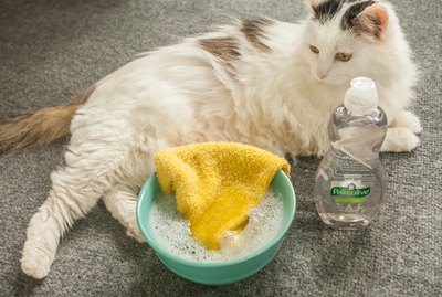 Tips for Bathing a Pet With Palmolive