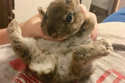 Woman's One-Handed Grab Saves Cuddle Bunny From A Soapy Fate