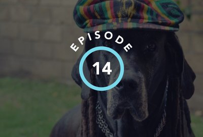 Episode 14: This Is How Your Pet Chooses Their Favorite Music