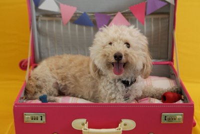 How To Make A Cute Dog Bed From An Old Suitcase