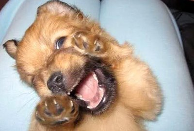 Just 21 Of The Silliest Darn Puppies We've Ever Seen