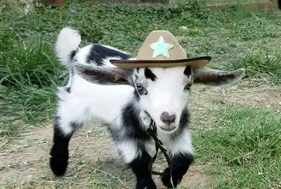 Baby Goats Wearing Cowboy Hats Is Basically All We Care About This Week