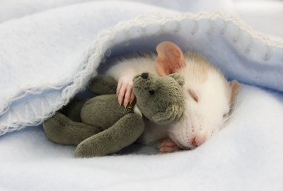 Just 15 Of The Cutest Rats Ever