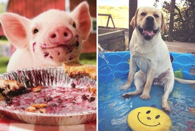 20 Animals Determined To Brighten Your Day