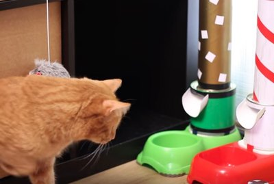 You Can Play With This Cat Live On YouTube For A Small Donation