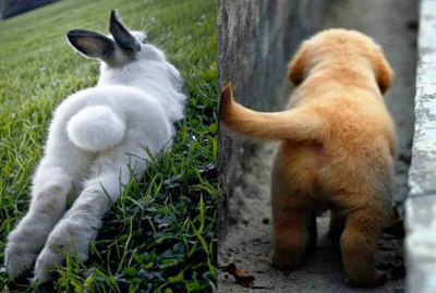 18 Cute Pet Butts You Must See Before Dying