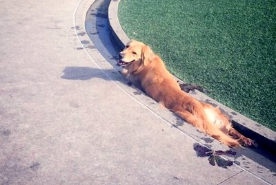 29 Animals Who Just Can't Figure Life Out