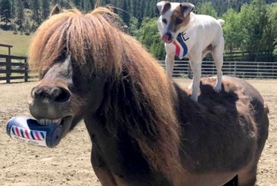 Sassy Pup Teaches Ornery Pony To Love Again