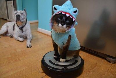 RIP Max, The Roomba Shark Cat