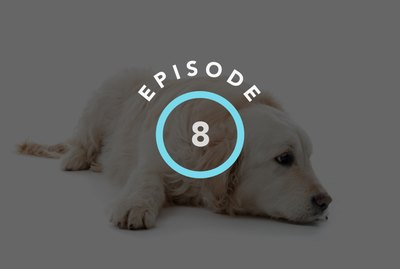 Episode 8: How To Calm Your Pet's Anxiety